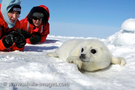 救救可愛的海豹